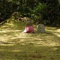 写真: 念仏寺