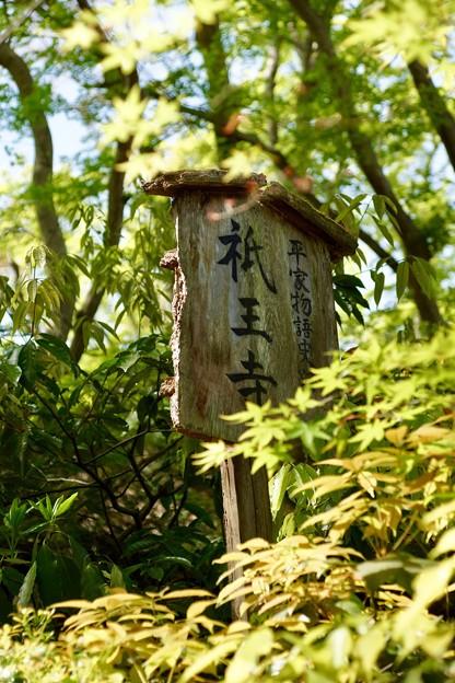 写真: 祇王寺