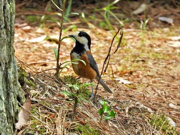 Photos: 野鳥 83