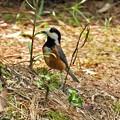 写真: 野鳥 83