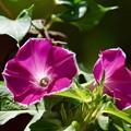 写真: 夏の花 3