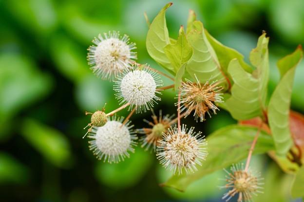 夏の花 4