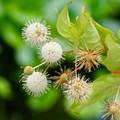 写真: 夏の花 4