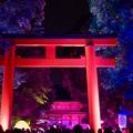 Photos: 光の祭