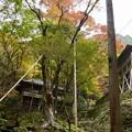 Photos: 古知谷カエデ さん