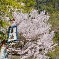 Photos: お花見~