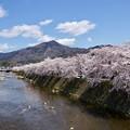 比叡山と桜並木
