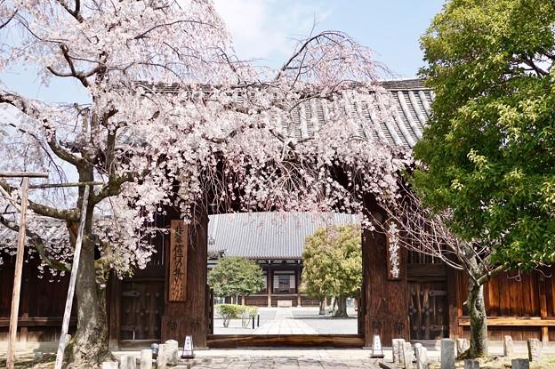 大門と枝垂れ桜