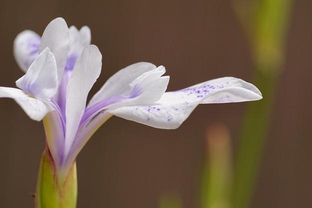 Photos: 春の浪