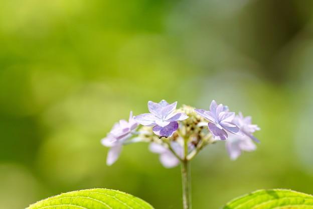 Photos: 七段花