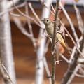 Photos: 野鳥 4