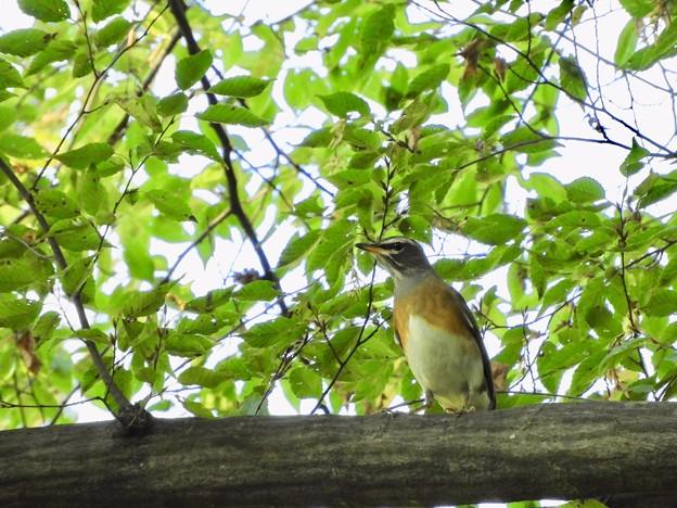 Photos: 野鳥 6