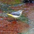 Photos: 野鳥 7