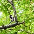 Photos: 野鳥 8
