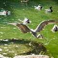 Photos: 野鳥 12