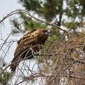 野鳥 14