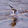 Photos: 野鳥 18