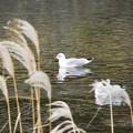 野鳥 26
