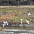 Photos: 野鳥 31