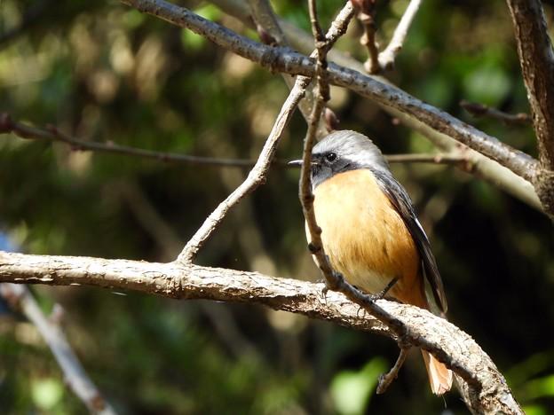 Photos: 野鳥 32