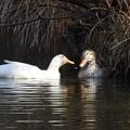 Photos: 野鳥 33