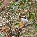 Photos: 野鳥 34