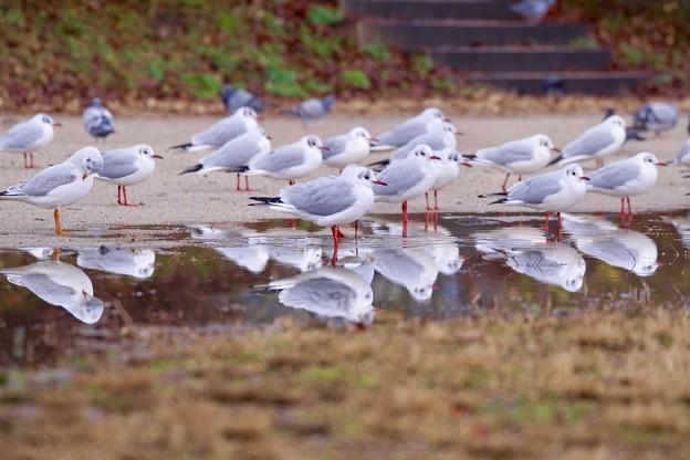 Photos: 野鳥 35
