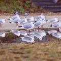 野鳥 35