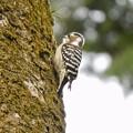 Photos: 野鳥 37