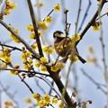 Photos: 野鳥 38