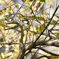 Photos: 野鳥 39