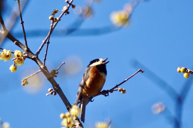 野鳥 41