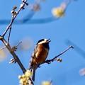 Photos: 野鳥 41