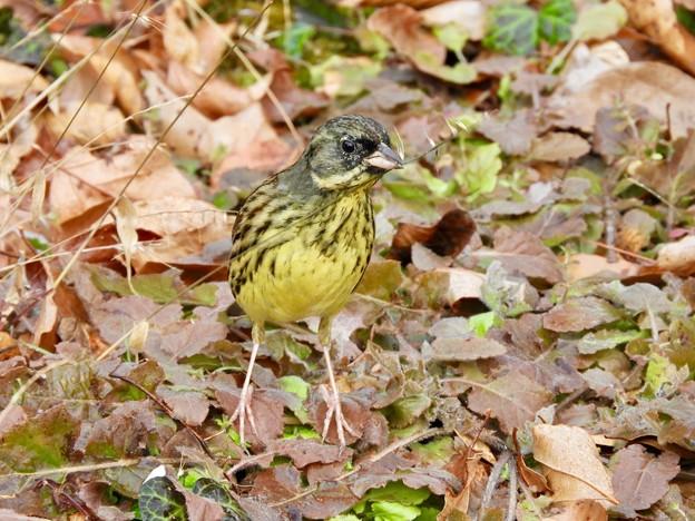 Photos: 野鳥 60