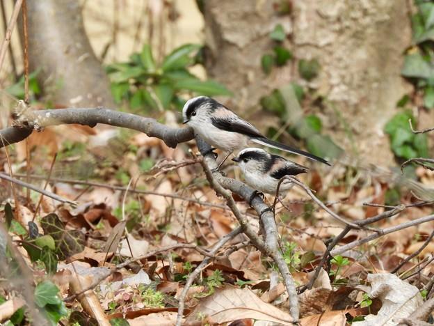 Photos: 野鳥 61