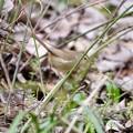 野鳥 62