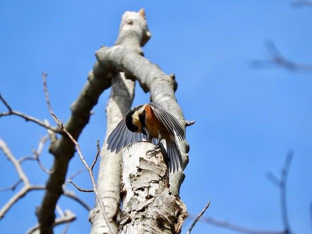 野鳥 63