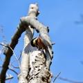 Photos: 野鳥 63