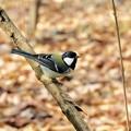 野鳥 64