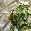 Photos: 野鳥 66