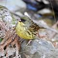 Photos: 野鳥 72