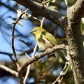 野鳥 73