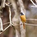 野鳥 74