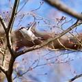 野鳥 78