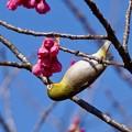 Photos: 野鳥 79