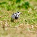 Photos: 野鳥 85-2