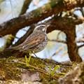 Photos: 野鳥 86