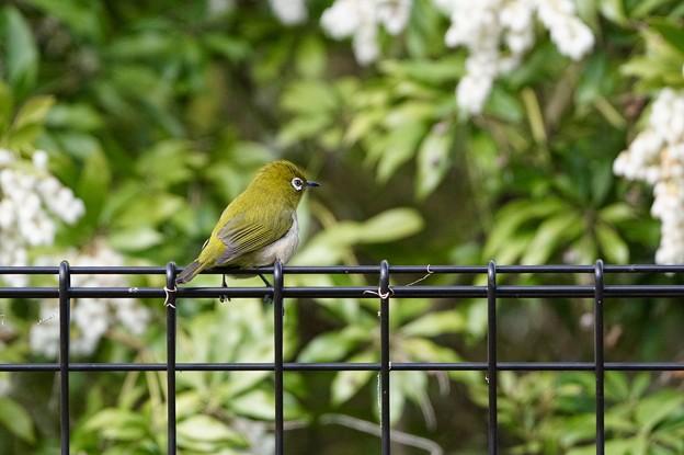 野鳥 88