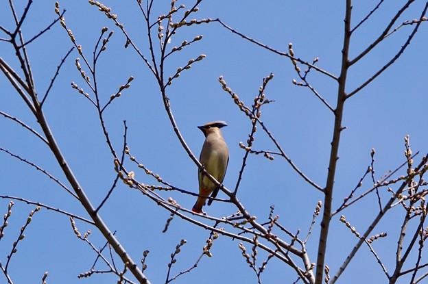 Photos: 野鳥 89