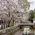 Photos: 桜 5